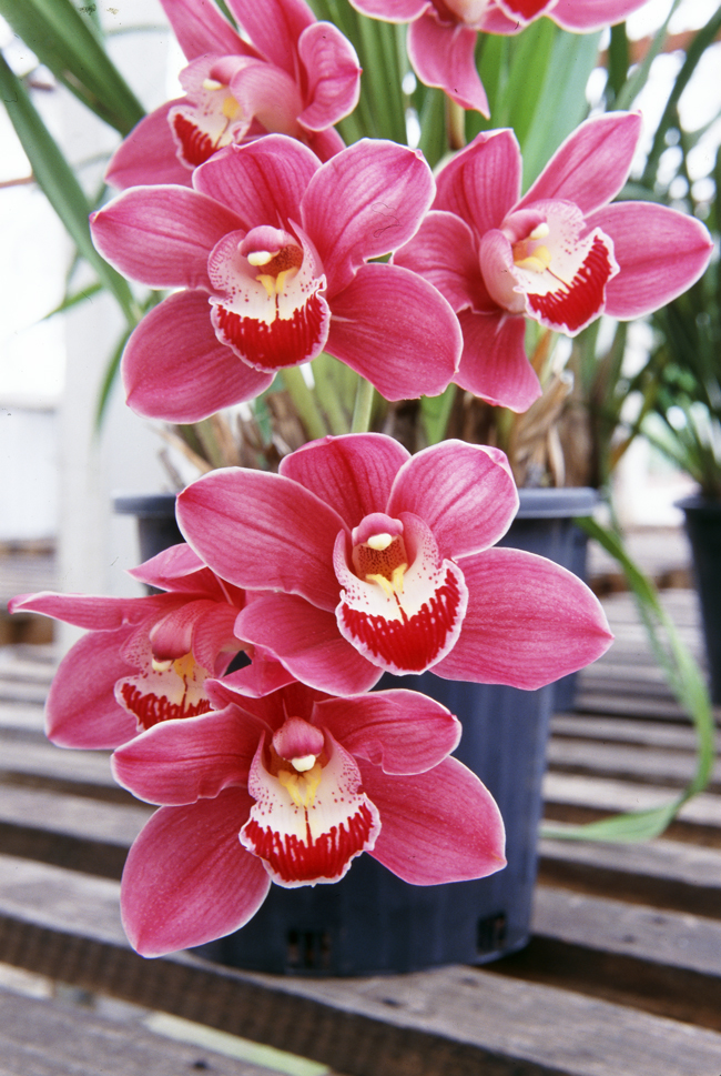 Growing Orchids Fact Sheet