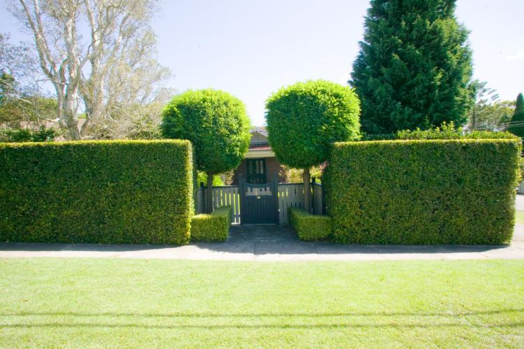 Best Lilly Pilly Varieties Burke S Backyard
