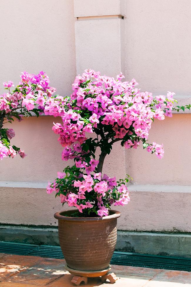 Best Pot Plants For Sun And Shade Burke S Backyard