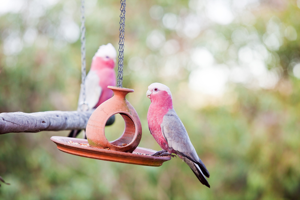 What are some tips for identifying wild birds?