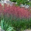 Feature Plant
