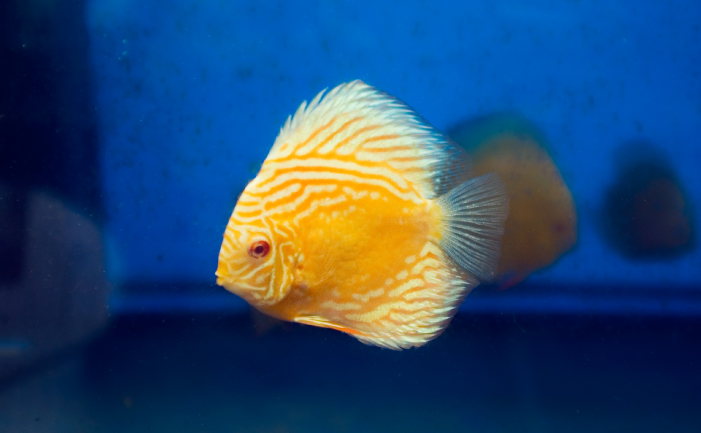 Best Tropical Fish Food Forum