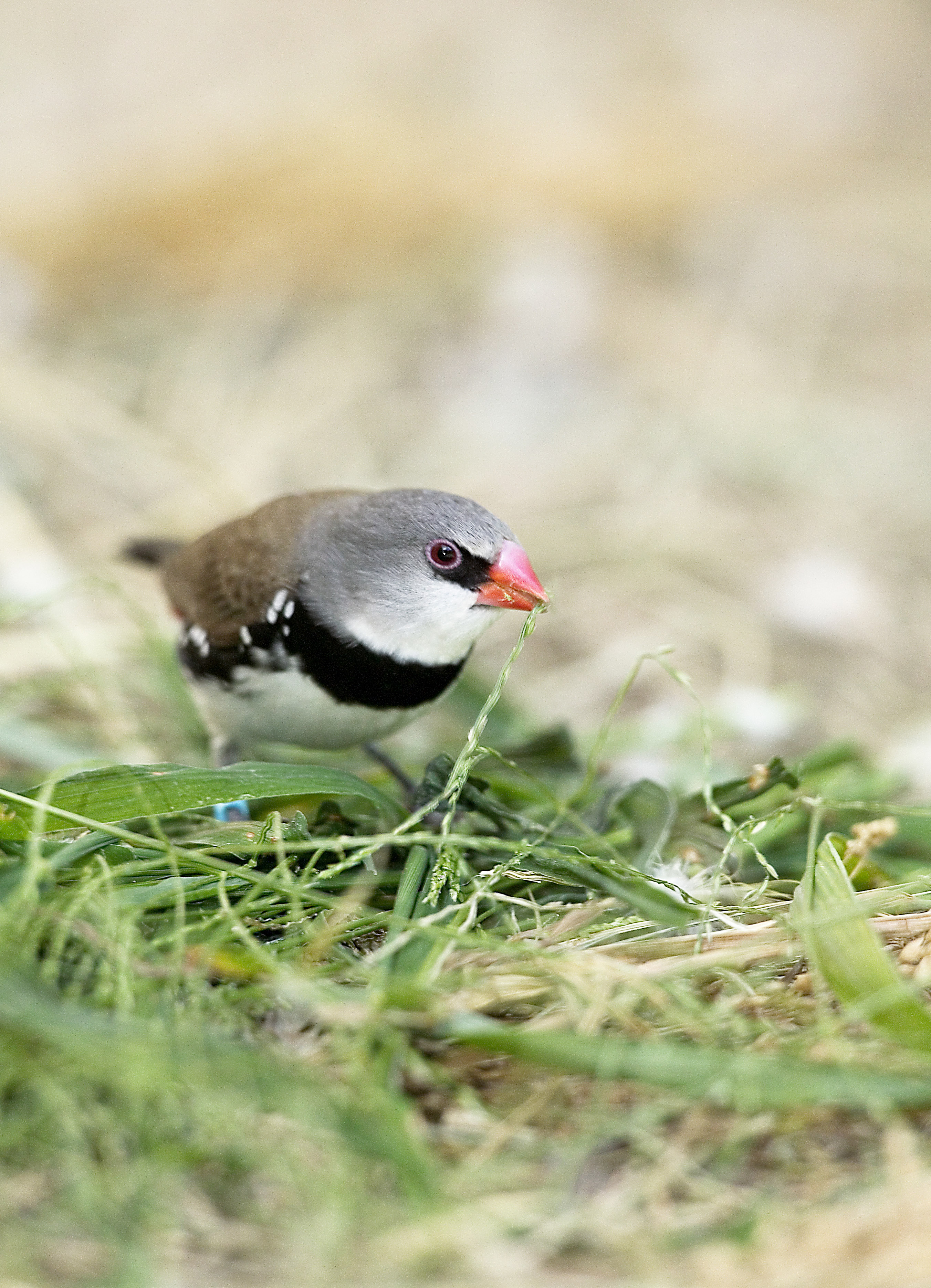 Don's Tips - Attracting Native Birds - Burke's Backyard