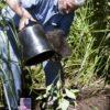 Don Planting