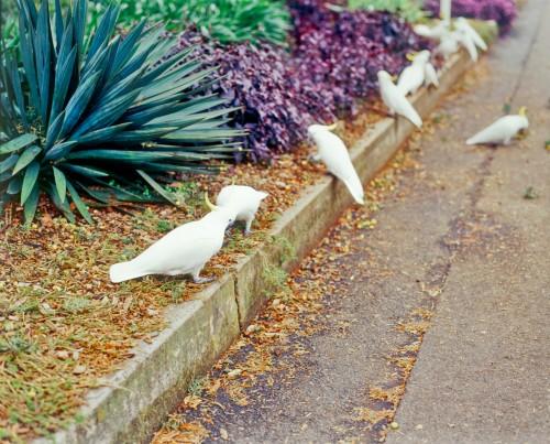 Don's Tips: Wild Birds