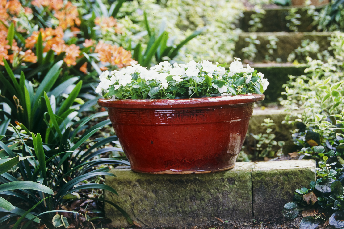 Don's Tips: White Flowering Plants