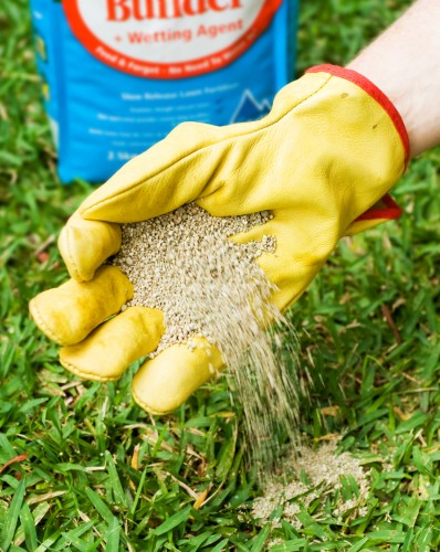 Don's Tips: Lawn Foods