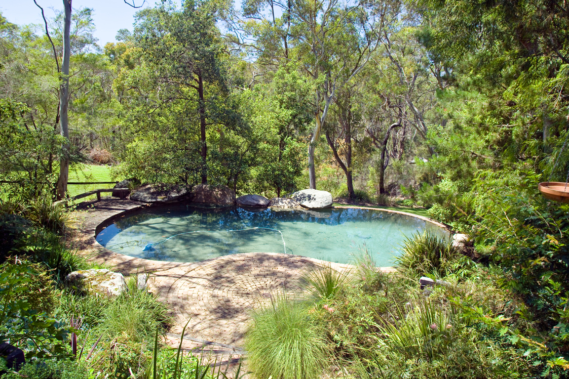 Don s tips messy plants around pools burke 39 s backyard for Flowers around swimming pool