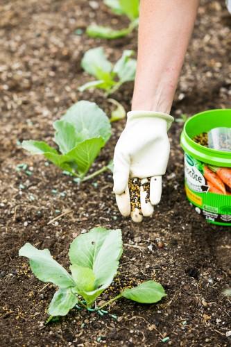 Don's Tips: Fertilise Vegies Now