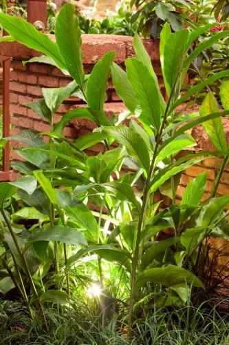 Don's Tips: Garden Lights