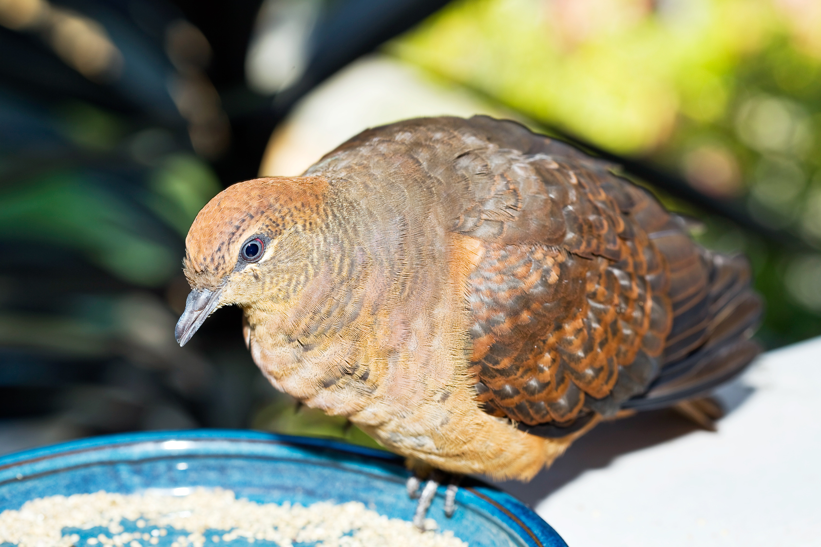 Don's Tips: What To Do With A Lost Bird That You Find