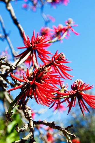 Don's Tips: Coral Trees Could Kill You