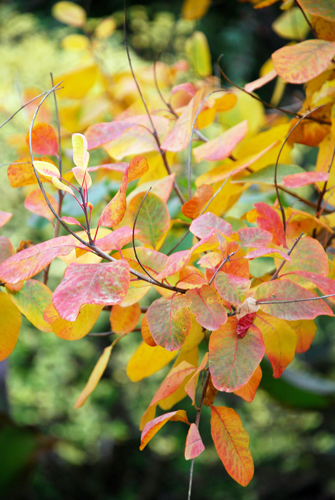 Loving Autumn