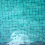 Don's Expert Answers: Lilly pilly cmas bush dying near pool