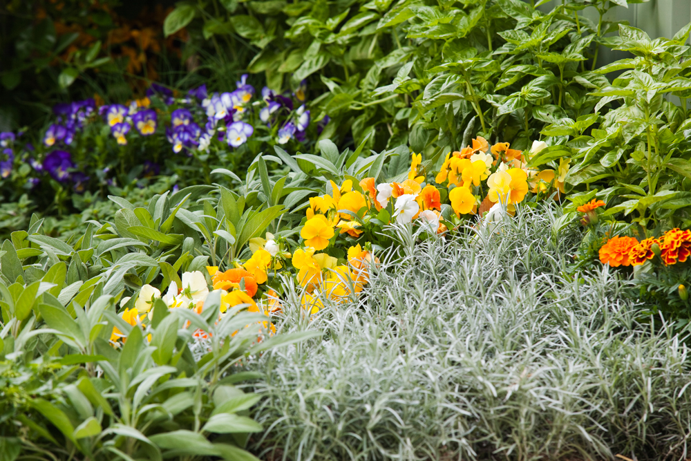 Don's Tips: Sprucing Up Bland Gardens