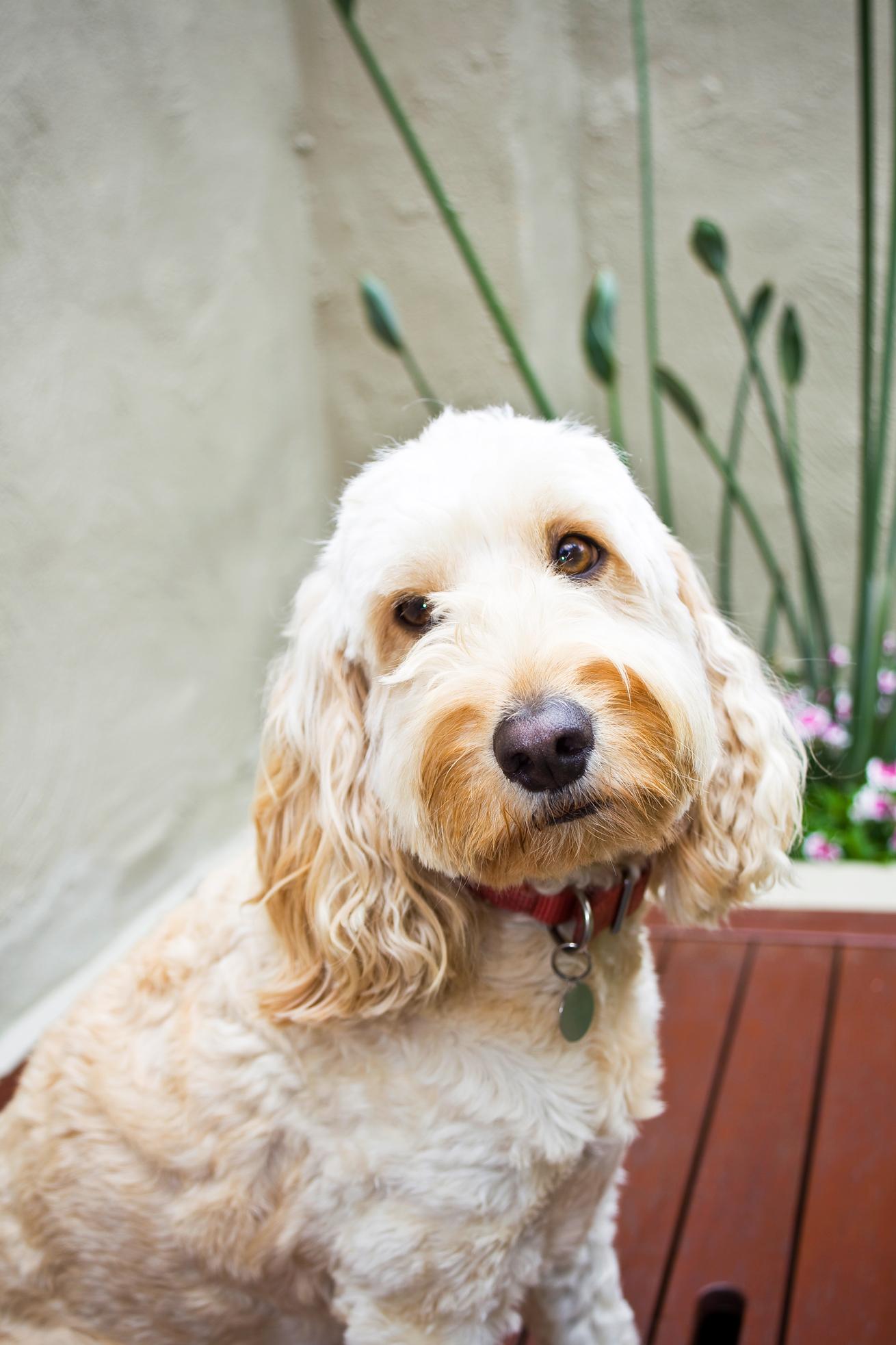 top 10 dogs burke u0027s backyard