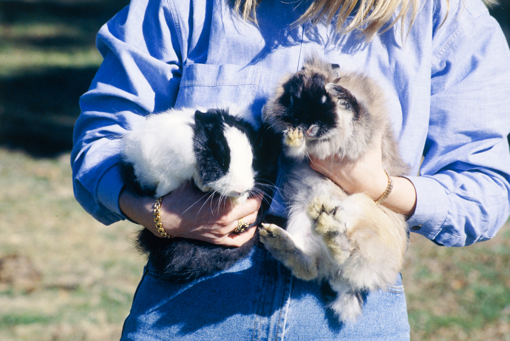 Don's Tips: Dwarf & Mini Lop Rabbits