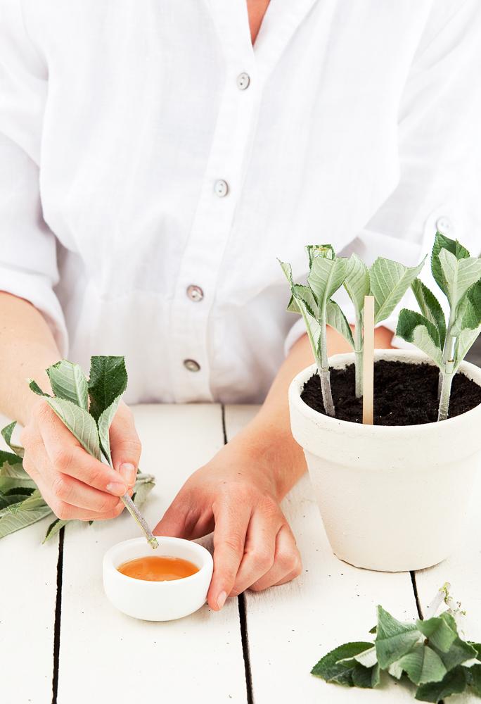 Don's Tips: Gardening Tips