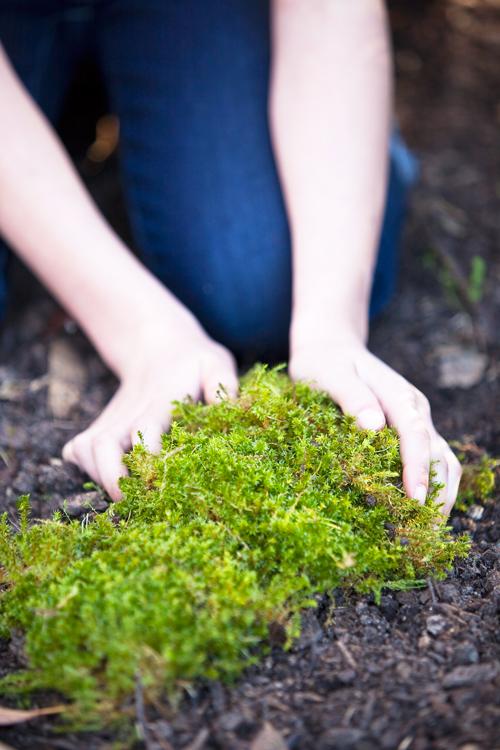 Don's Tips: Moss