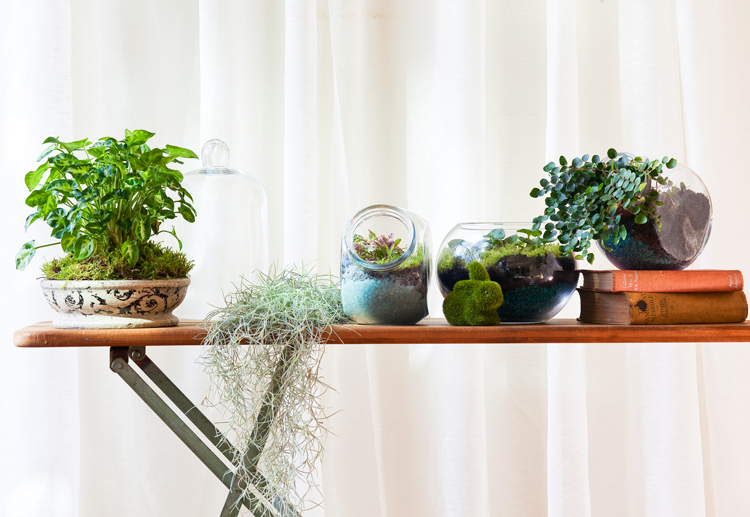 Don's Tips: Terrariums