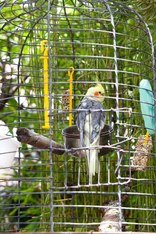 Don's Tips – Catching Escaped Birds