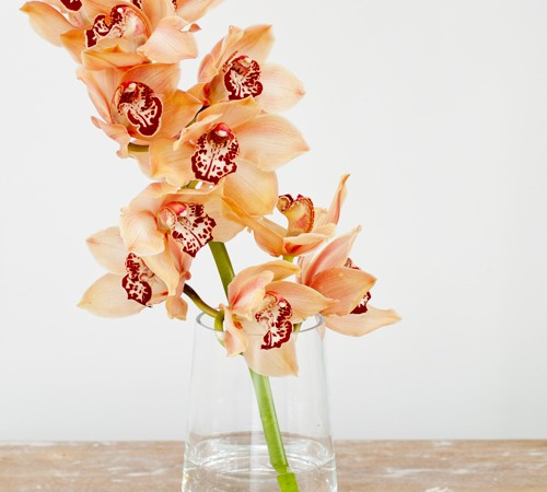 Cymbidium - Winter Orchids