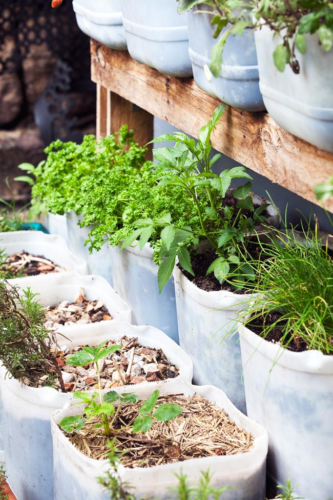 Herbs - Burke's Backyard