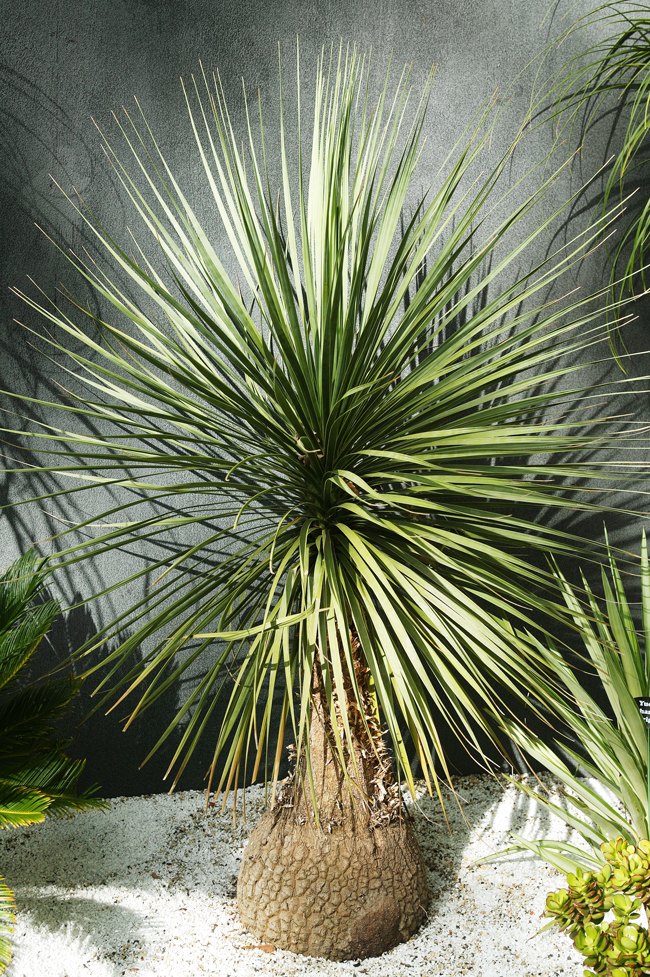 Best Pot Plants For Sun And Shade Burke 39 S Backyard