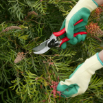 Don's Tips: Spring Pruning