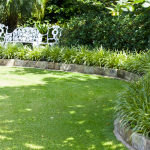Don's Tips – The Lawn