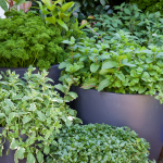 Don's Tips: Herb Pots