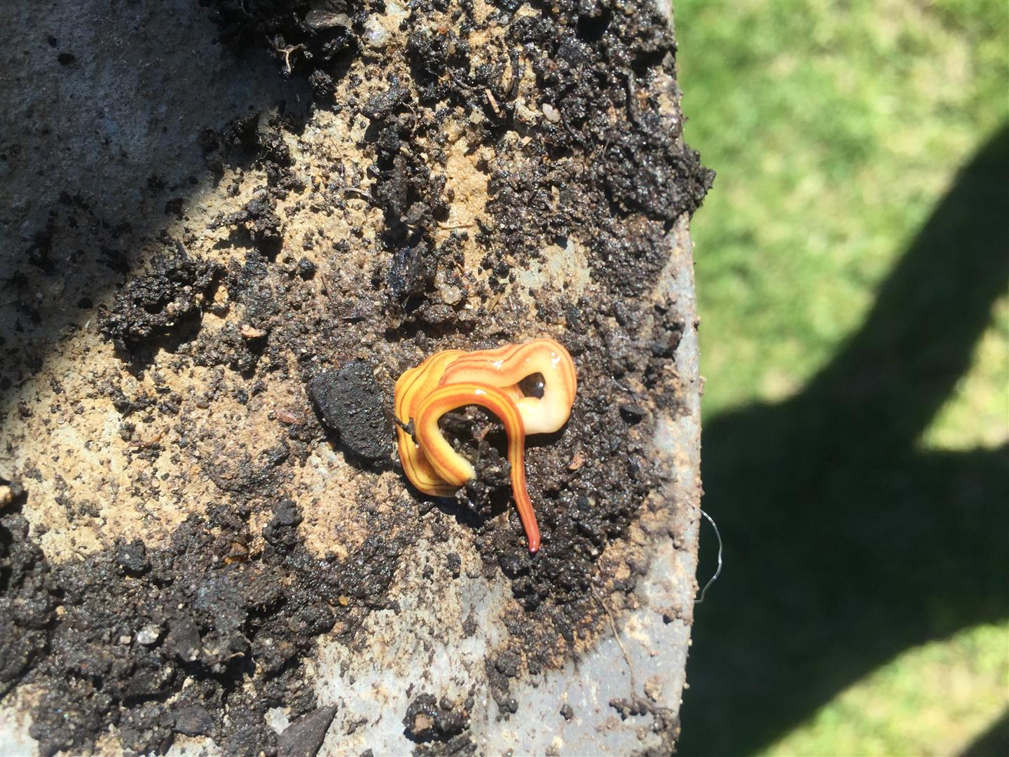 Unknown Worms or Parasites Garden Beds