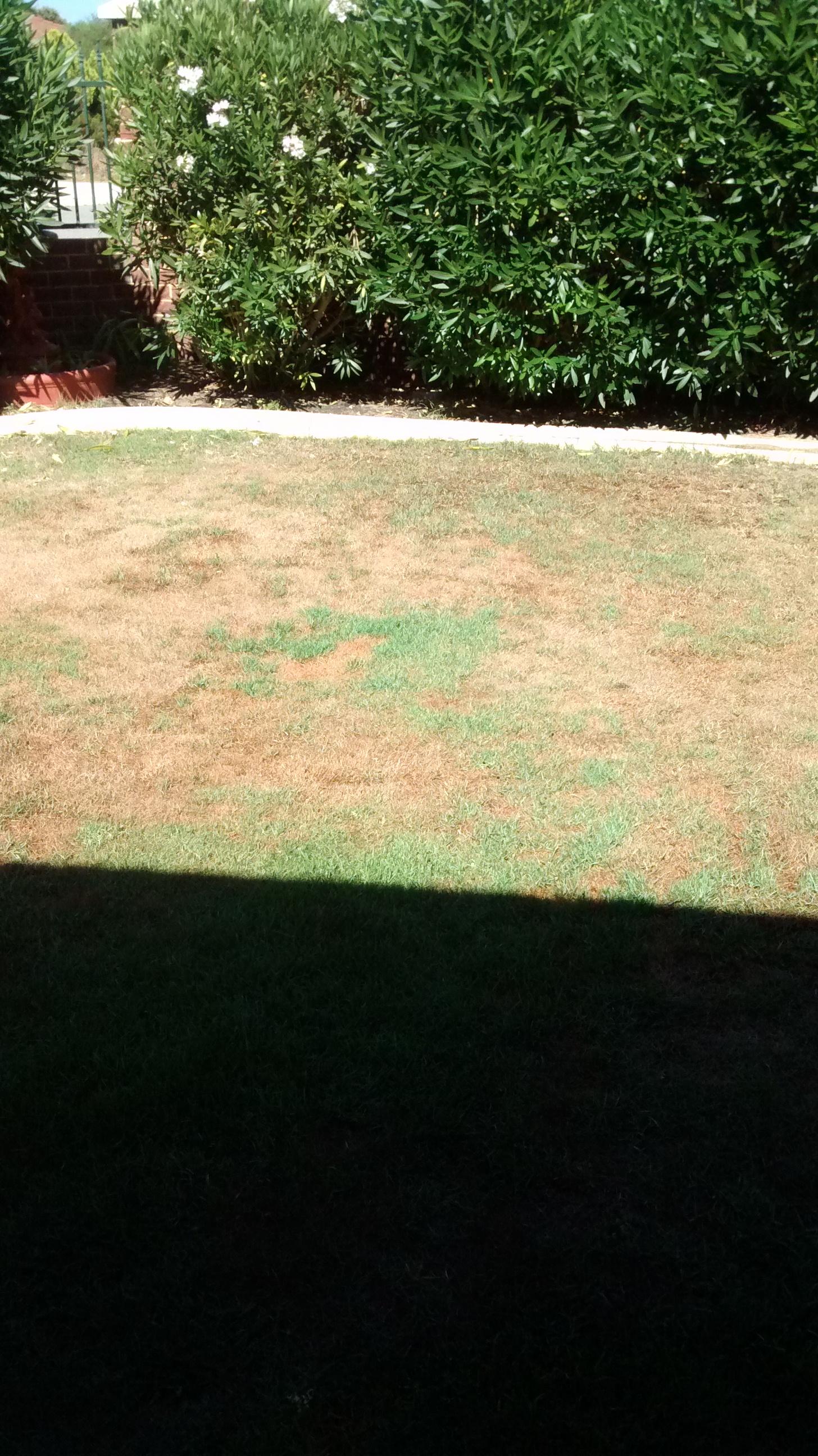 pseudo arthritis burke u0027s backyard