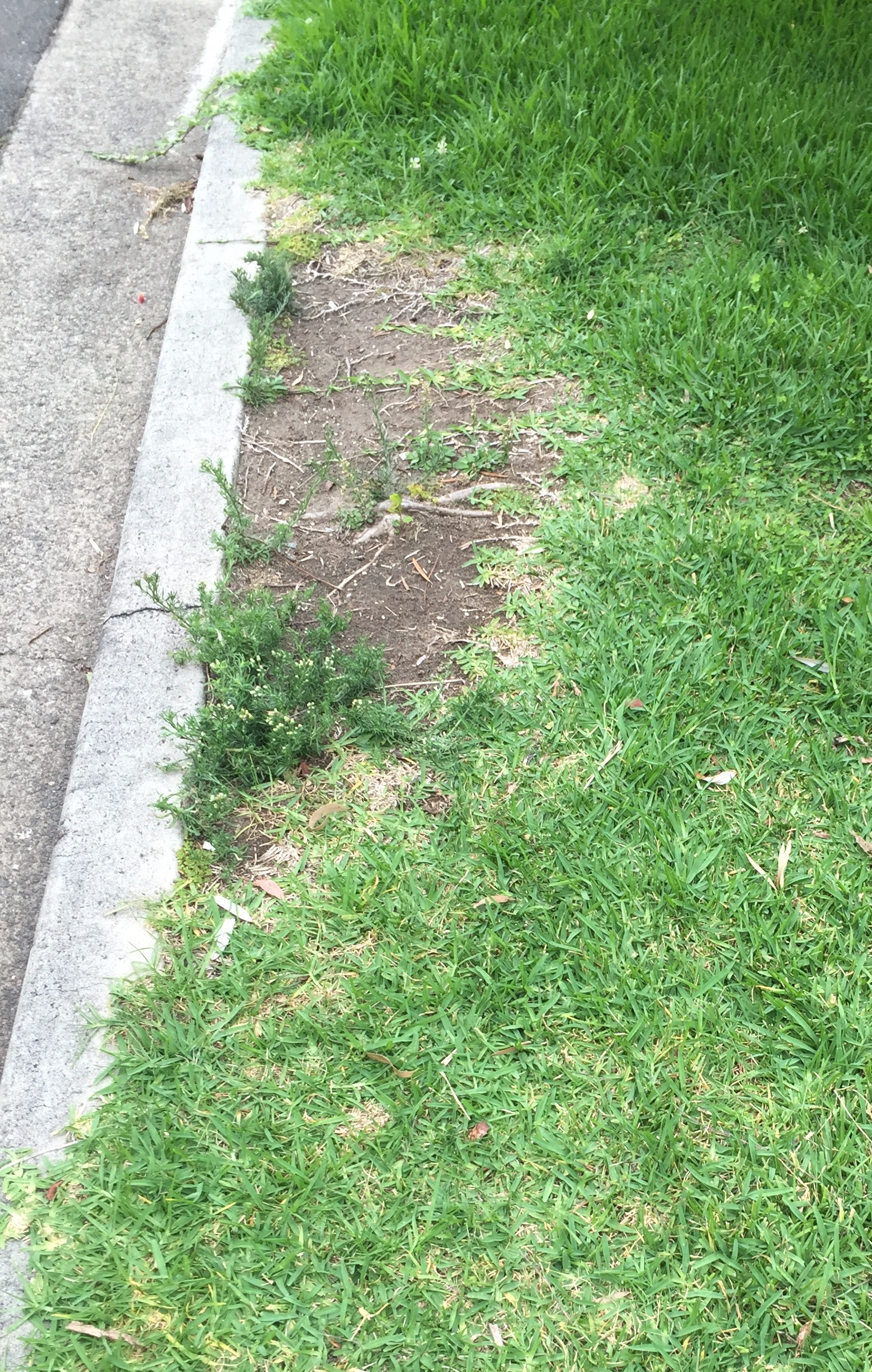 Don's Expert Answers:  Lawn will not grow in one patch, and the patch is spreading.