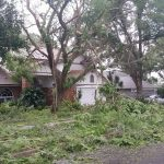 Don's Expert Answers: Tree is bended for a long time, the roots are visible and after Irma hurricane lost a lot of branches