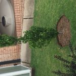 Don's Expert Answers: Ornamental Pear Capital not flowering