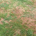 Don's Expert Answers: Lawn repair