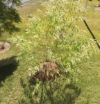 Don's Expert Answers: When to prune