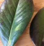 Don's Expert Answers: Slow growth and leaf discolouration/spotting/dropping