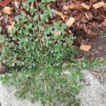 Don's Expert Answers: Mystery plant
